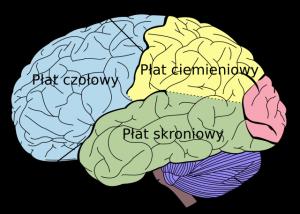 Neurologia, neurolog i układ nerwowy